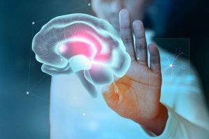 Doctor tocando un cerebro en una pantalla aludiendo a la neurociencia